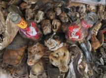 Fetisch-Markt in Ouida, Benin.